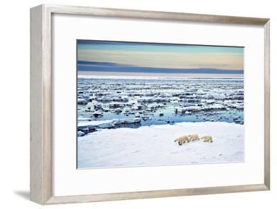 Mother and Cubs at the Shore-Howard Ruby-Framed Photographic Print