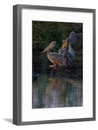 Night Swim-Howard Ruby-Framed Photographic Print