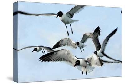 Gulls 1-Alan Hausenflock-Stretched Canvas Print