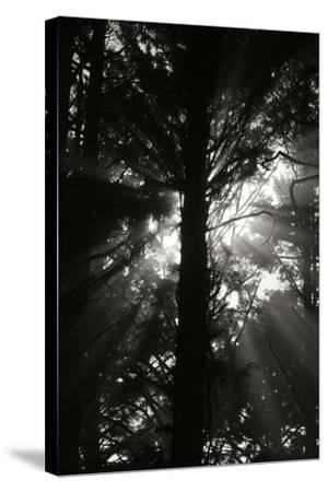 Light and Shadows I-Erin Berzel-Stretched Canvas Print