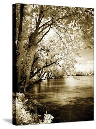 Spring on the River I-Alan Hausenflock-Stretched Canvas Print