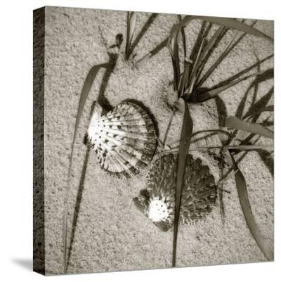 Seashells IV-Alan Hausenflock-Stretched Canvas Print