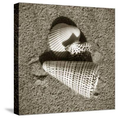 Seashells VII-Alan Hausenflock-Stretched Canvas Print