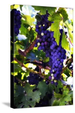 Grapes 2-Alan Hausenflock-Stretched Canvas Print