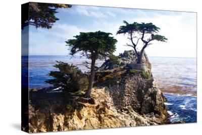Lone Cypress 2-Alan Hausenflock-Stretched Canvas Print