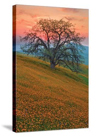 Rancheria-Mark Geistweite-Stretched Canvas Print