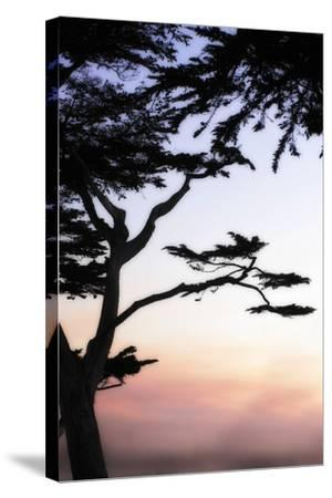 Cypress Silhouette 4-Alan Hausenflock-Stretched Canvas Print
