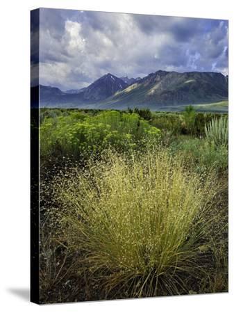 Eastern Sierra IV-Mark Geistweite-Stretched Canvas Print