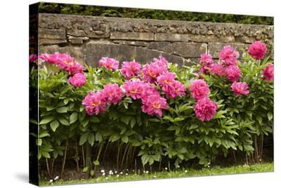 Garden Peonies II-Karyn Millet-Stretched Canvas Print