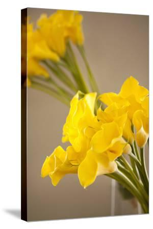 Yellow Calla Lilies-Karyn Millet-Stretched Canvas Print