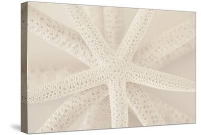 Ocean Treasures VII-Karyn Millet-Stretched Canvas Print