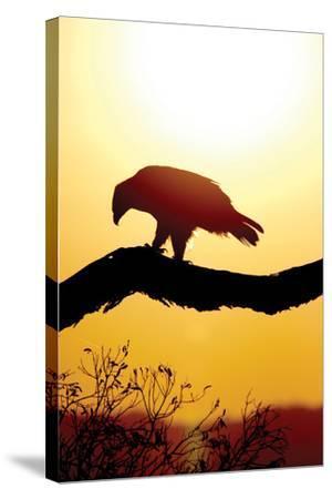 Tawny Sunrise-Susann Parker-Stretched Canvas Print