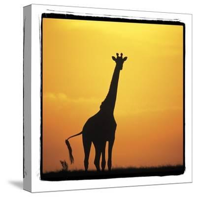 Radiant Africa 1-Susann Parker-Stretched Canvas Print