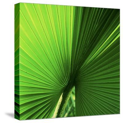 Palm Frond I-Bob Stefko-Stretched Canvas Print
