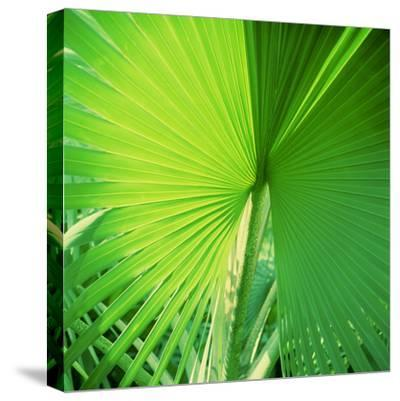 Palm Frond II-Bob Stefko-Stretched Canvas Print