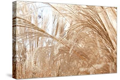 Blowing Grass I-Dana Styber-Stretched Canvas Print