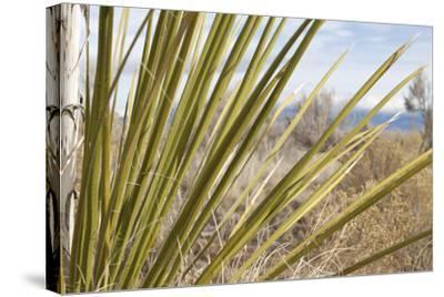 Century Plant II-Dana Styber-Stretched Canvas Print