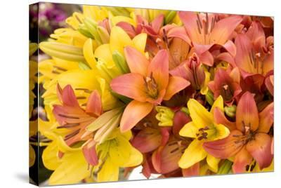 Sunny Lily I-Maureen Love-Stretched Canvas Print