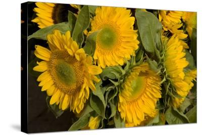 Sunflower I-Maureen Love-Stretched Canvas Print