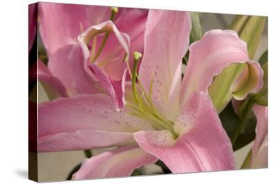 Soft Pink Lily I-Maureen Love-Stretched Canvas Print