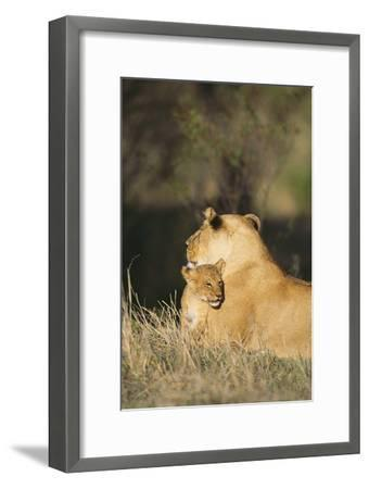 A Lion Cub Nestles Against Its Mother-Norbert Rosing-Framed Photographic Print