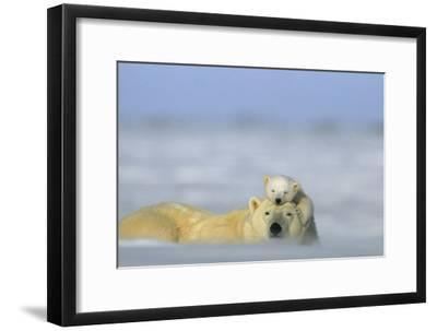 A Polar Bear Cub Finds a Peaceful Sleeping Spot On Its Mother's Head-Norbert Rosing-Framed Photographic Print
