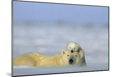 A Polar Bear Cub Finds a Peaceful Sleeping Spot On Its Mother's Head-Norbert Rosing-Mounted Photographic Print