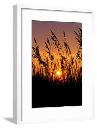 Sea Grass Silhouetted At Sunrise-Brian Gordon Green-Framed Photographic Print