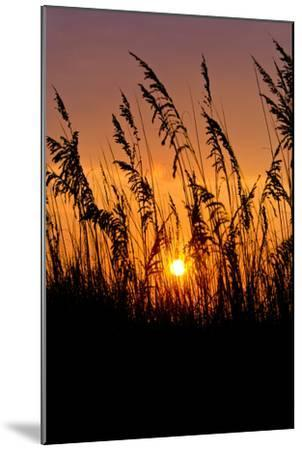 Sea Grass Silhouetted At Sunrise-Brian Gordon Green-Mounted Photographic Print