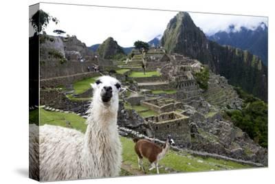 The Ruins At Machu Picchu and a Couple of Llamas-Kent Kobersteen-Stretched Canvas Print