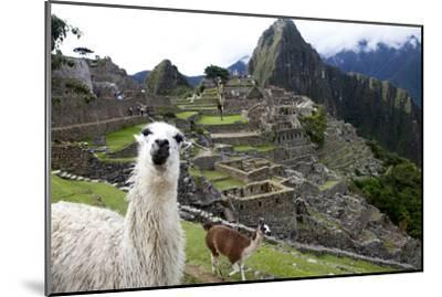 The Ruins At Machu Picchu and a Couple of Llamas-Kent Kobersteen-Mounted Premium Photographic Print