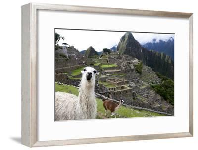 The Ruins At Machu Picchu and a Couple of Llamas-Kent Kobersteen-Framed Premium Photographic Print