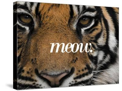 Meow-Thorsten Milse-Stretched Canvas Print