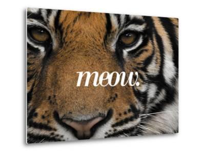 Meow-Thorsten Milse-Metal Print
