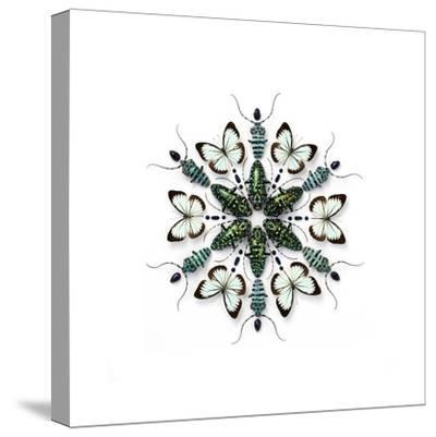 Elegans Prism-Christopher Marley-Stretched Canvas Print