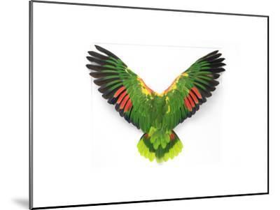 Double Yellow Headed Amazon-Christopher Marley-Mounted Photographic Print