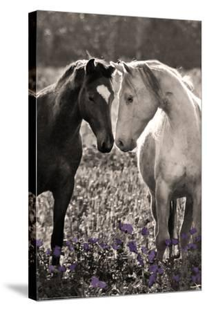 Horses I-Sally Linden-Stretched Canvas Print