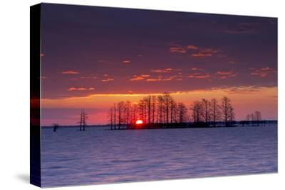 A Colorful Sunrise Over Silhouetted Cypress Trees in Lake Mattamuskeet-Robbie George-Stretched Canvas Print