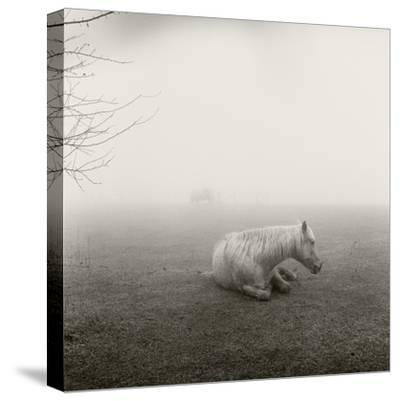 A Horse Resting in Heavy Fog-Stephen Alvarez-Stretched Canvas Print