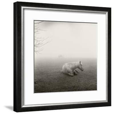 A Horse Resting in Heavy Fog-Stephen Alvarez-Framed Photographic Print
