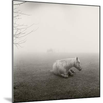 A Horse Resting in Heavy Fog-Stephen Alvarez-Mounted Photographic Print