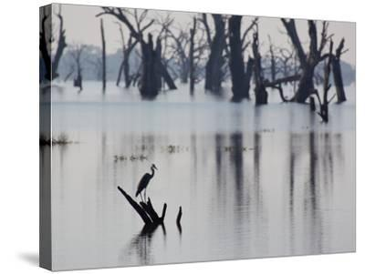 A Gray Heron, Ardea Cinerea, Rests on a Dead Tree in a Lake-Alex Saberi-Stretched Canvas Print