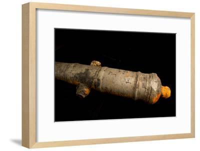 A 17th Century Cannon Found on a Shipwreck in Panama-Jonathan Kingston-Framed Photographic Print
