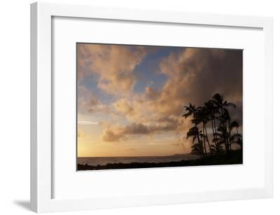 Silhouetted Palm Trees and Pinkish Clouds at Sunset on Poipu Beach-Marc Moritsch-Framed Photographic Print