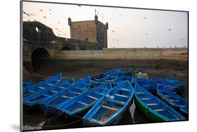 Birds Fly Over the Traditional Blue Boats of Essaouira Harbor-Cristina Mittermeier-Mounted Photographic Print