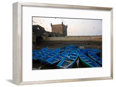 Birds Fly Over the Traditional Blue Boats of Essaouira Harbor-Cristina Mittermeier-Framed Photographic Print