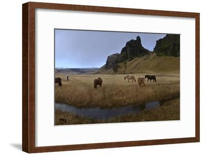 Icelandic Horses in a Pasture-Raul Touzon-Framed Photographic Print