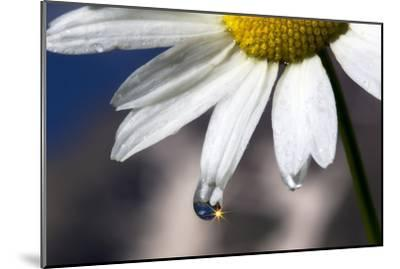 A Sparkle in a Drop of Water on a Daisy Petal-Robbie George-Mounted Photographic Print