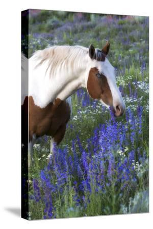 Portrait of a Horse in a Field of Purple Wildflowers-Robbie George-Stretched Canvas Print