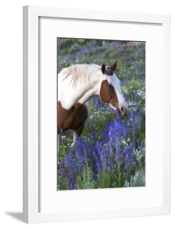Portrait of a Horse in a Field of Purple Wildflowers-Robbie George-Framed Photographic Print